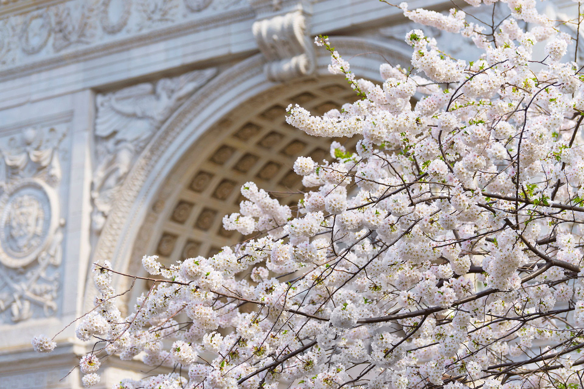 White Flowers Washington Square Arch