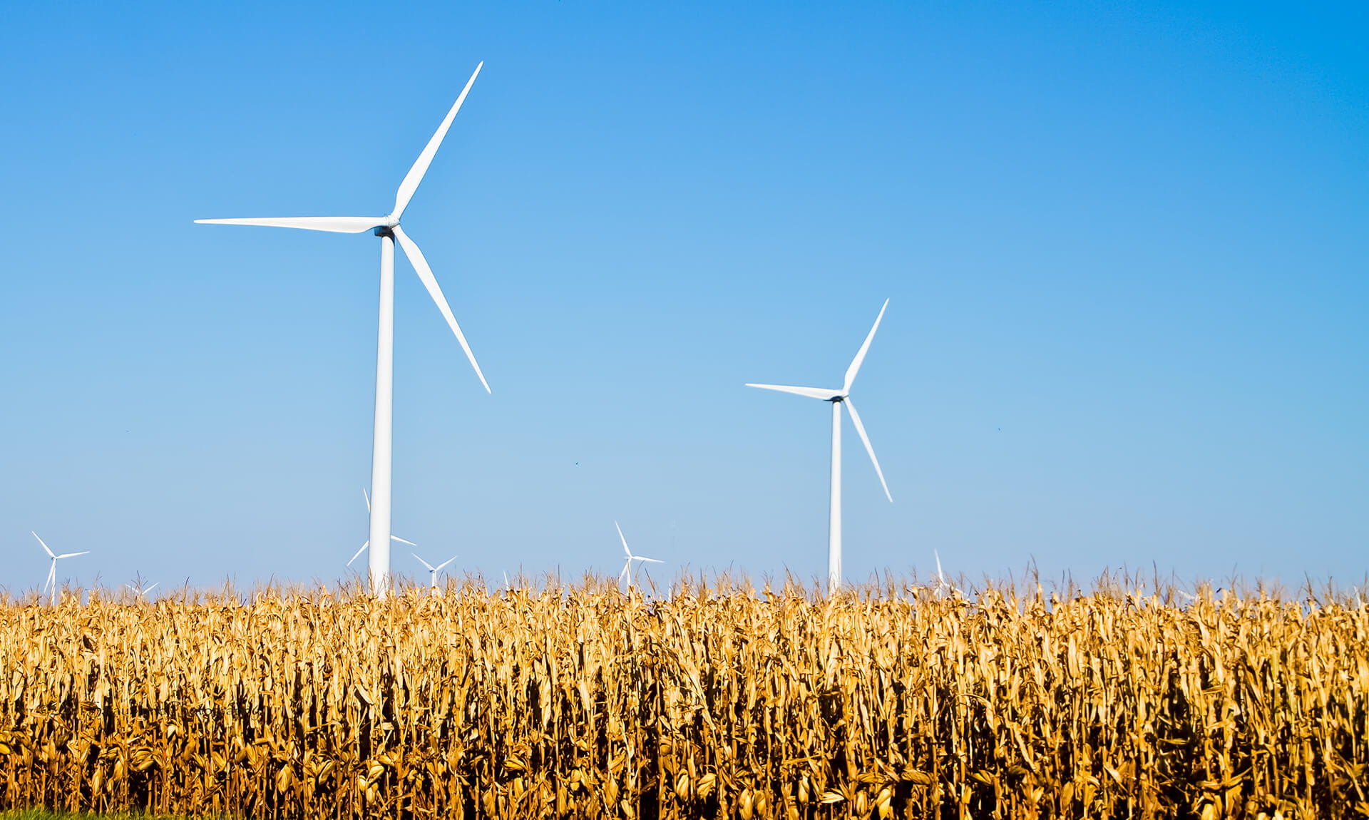 Wind Turbine Wheat Field