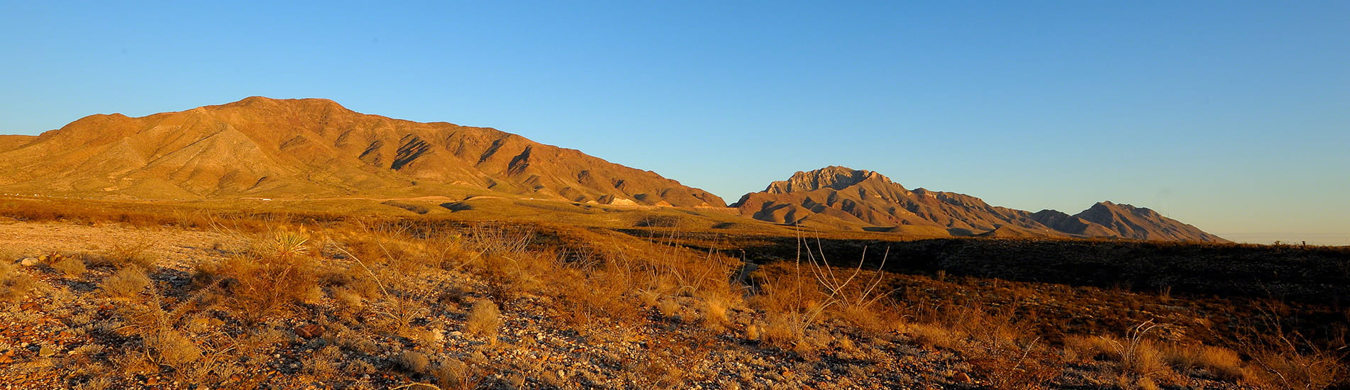 Dry desert vegetation in front of a mountain range and blue sky.