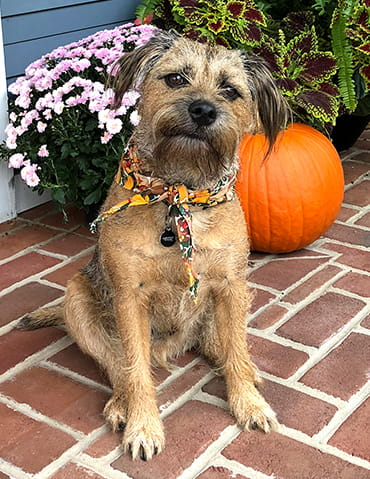 Bodie sitting and posing for the camera beside a pumpkin and flowers