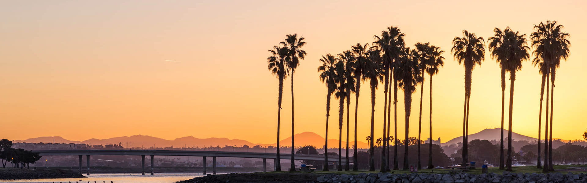 California river palm trees at sunset