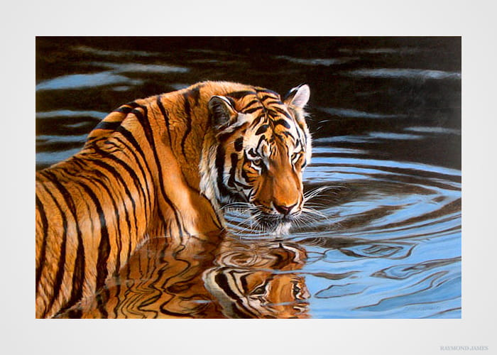 Hillier - Tiger in Water