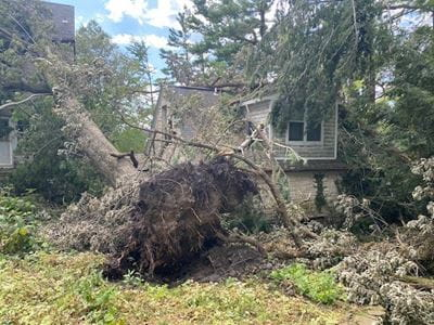 A large tree in front of a home is uprooted from the storm